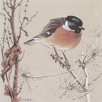 Stonechat painted for Shell by Eric Ennion.