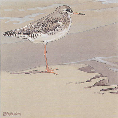 Redshank painted for Shell by Eric Ennion.