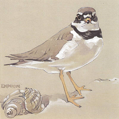 Ringed Plover painted for Shell by Eric Ennion.